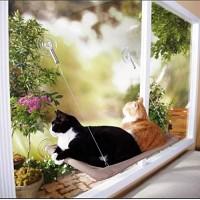 Cat Kitten Hanging Window Bed